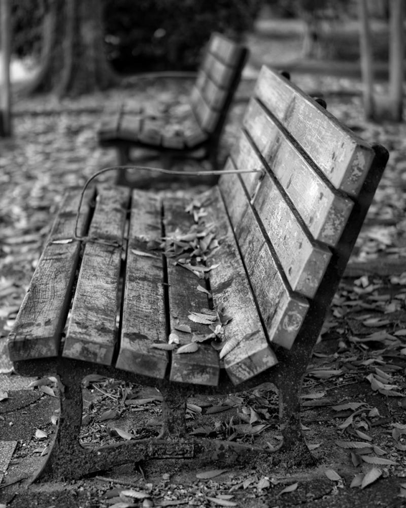 公園の古く青いベンチに落ち葉が載っている モノクロ