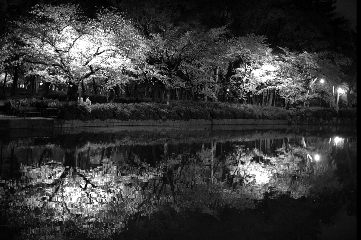 名城公園の桜 モノクロ