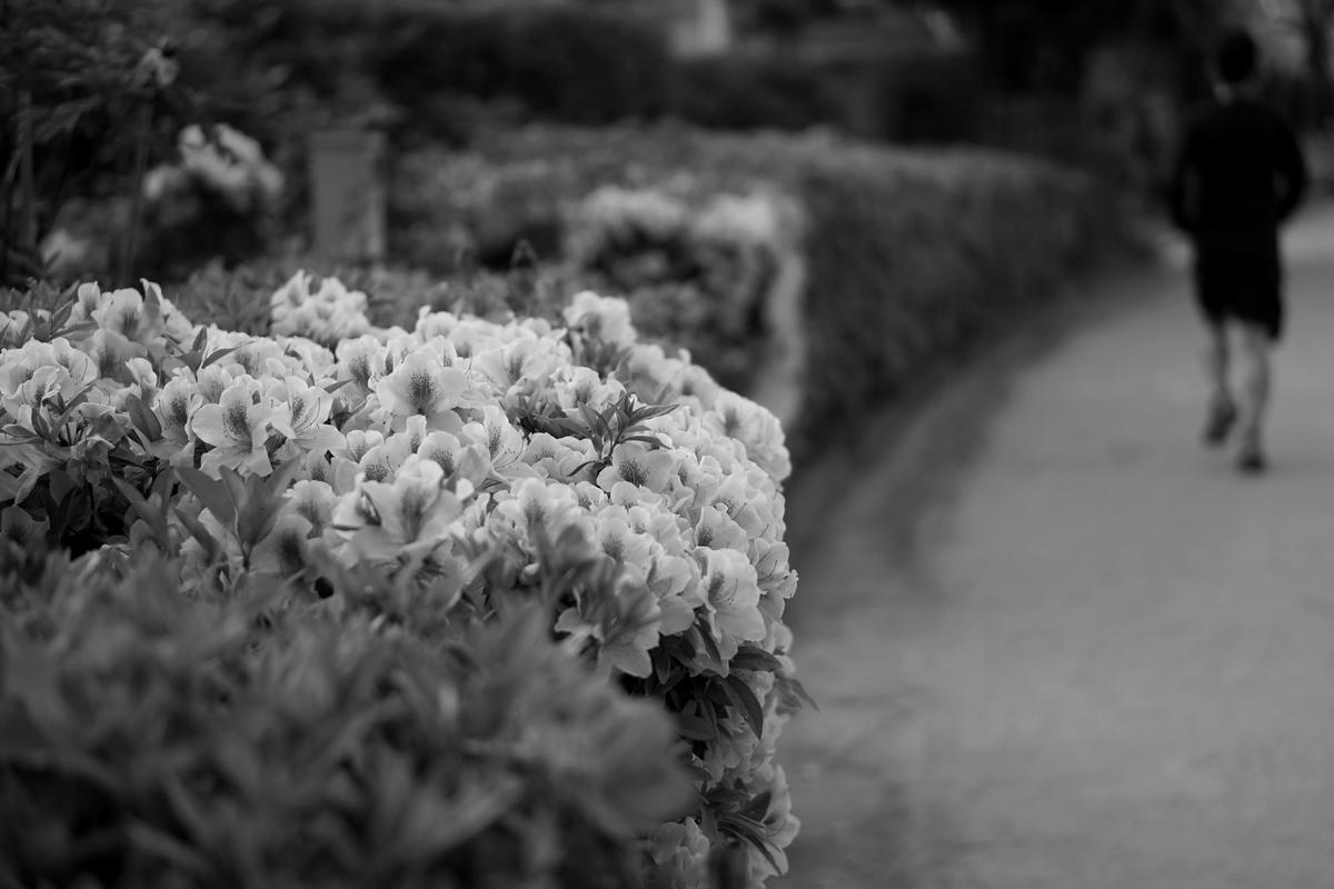 名城公園のツツジ モノクロ