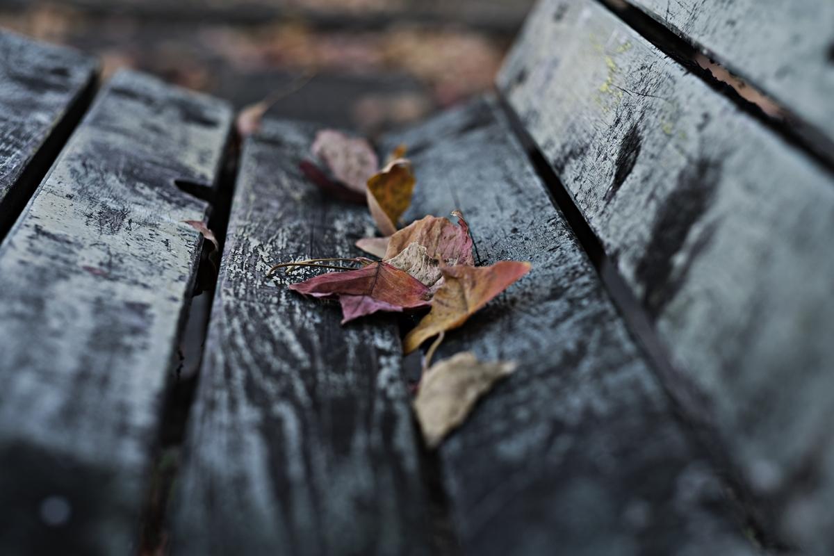 落ち葉のあるベンチ